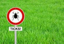 Lyme Disease: 13 Common Myths Exposed from ThinkStock