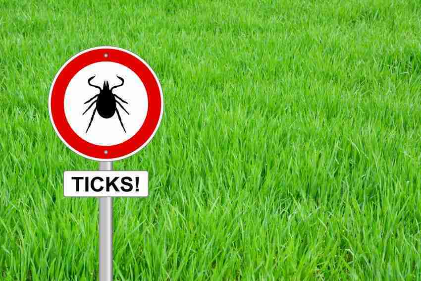 Lyme Disease 13 Common Myths Exposed Is On The